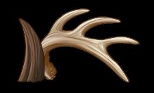 Antlers or Horns
