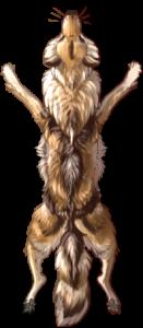 Canine Pelt