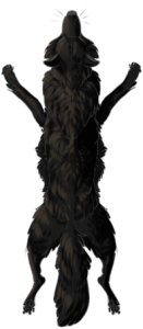 Canine Pelt - Melanistic