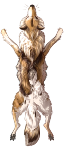 Canine Pelt - Piebald