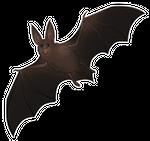 Bat Companion
