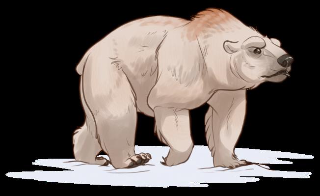 Bear Companion