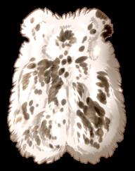 Small Animal Pelt - Piebald