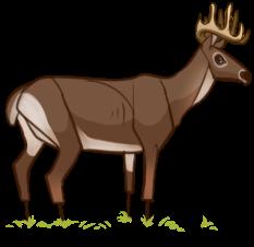 Buck Decoy