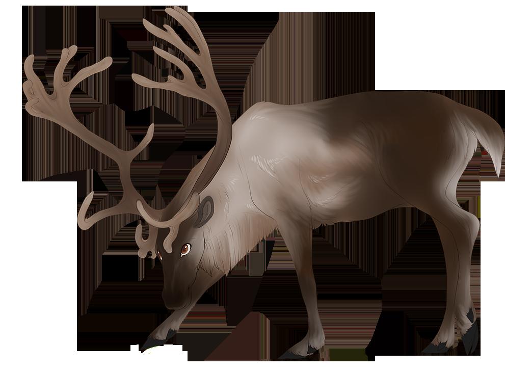 Reindeer Companion