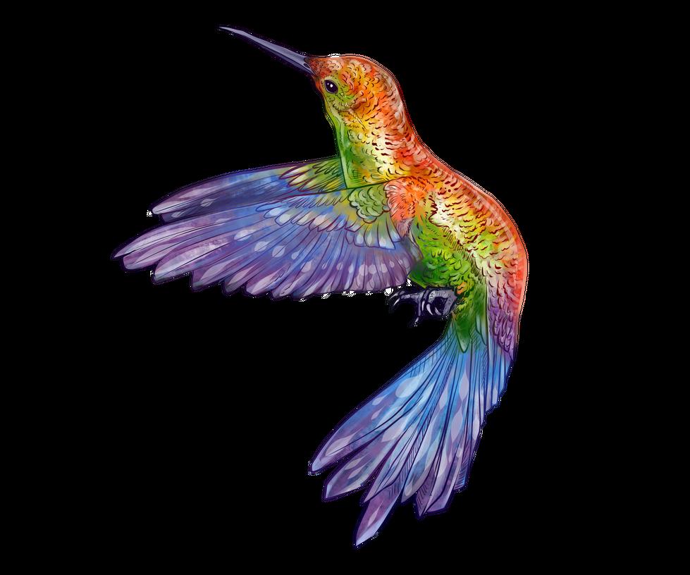 Hummingbird Companion